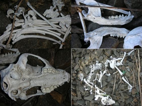 Bones along thetracks