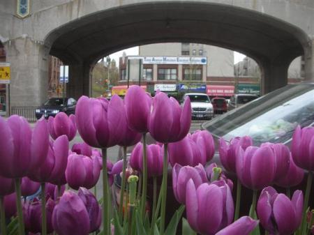 tulips-el-3639-small.jpg