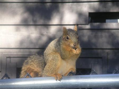 squirrel-20-small.jpg