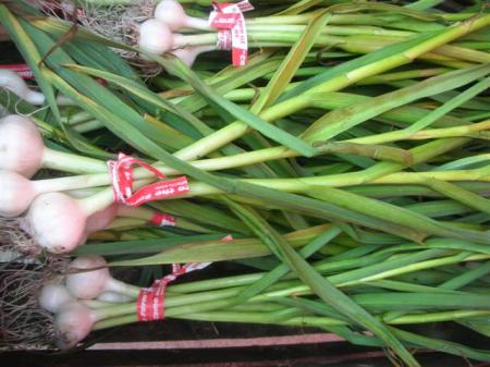 farmers-market-scallions-5291-small.jpg