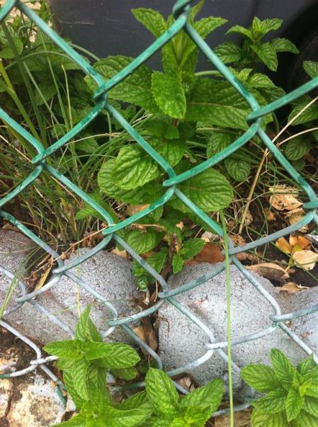 City Herbs